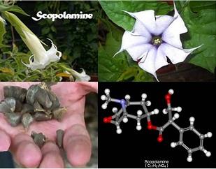 scopolamine final